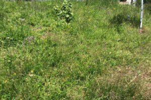 Eine Wildblumenwiese ist gut für Bienen und Insekten.